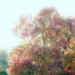 クロード・モネ / Tree by Water