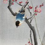 小原古邨 / 梅と青い鳥