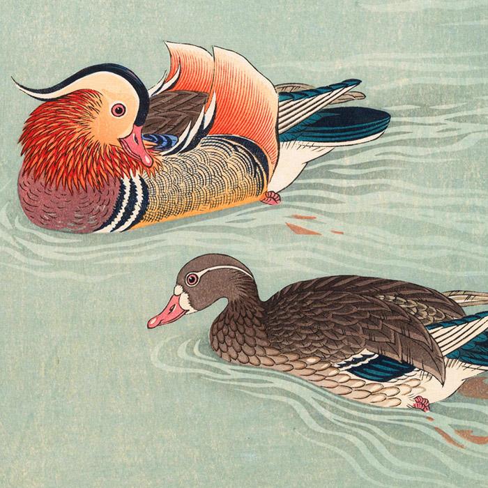 Ohara koson - Mandarin duck d