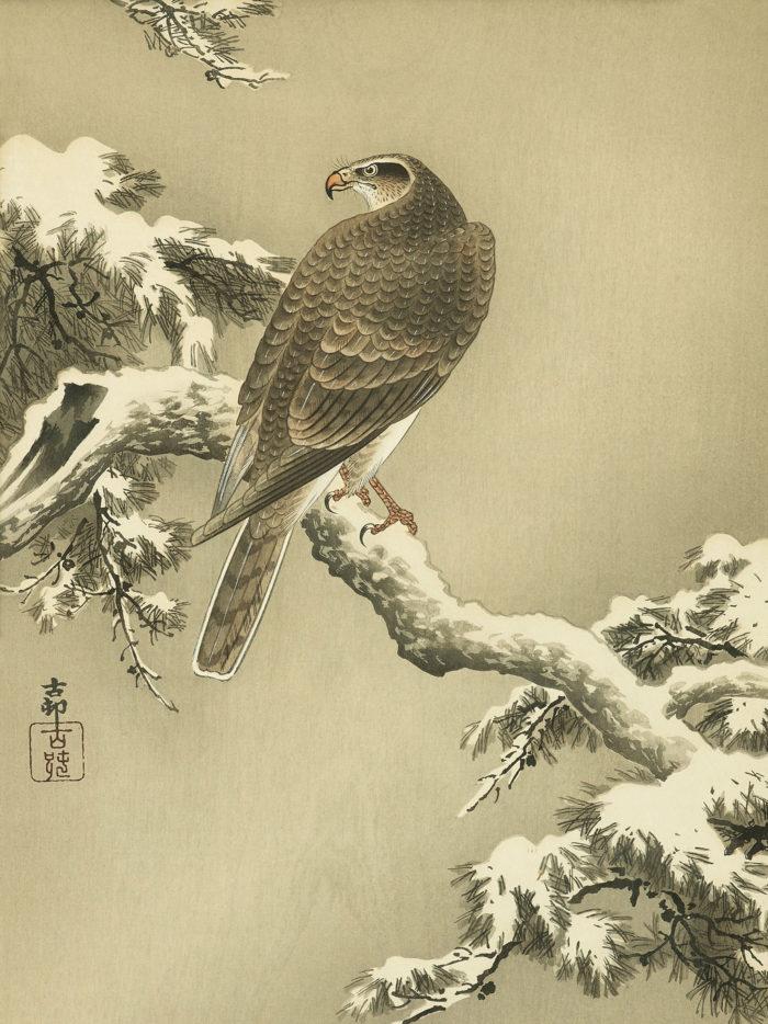 小原古邨 松に鷹 Ohara Koson - Matsu ni taka 2048x2732