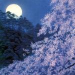 東山魁夷 / 宵桜